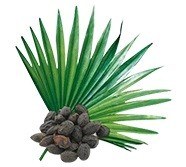 Saw Palmetto DHT-blokker